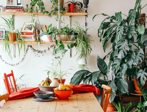 Ontstress eens met een plant