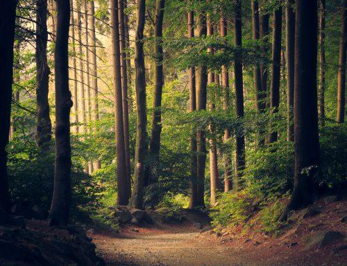 Bomen, de kortste weg naar een koele aarde